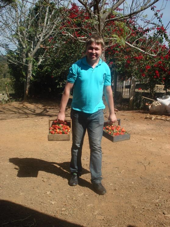 Eĉ en la fragaj rikoltadoj li laboris - Até na colheita de morangos ele trabalhou